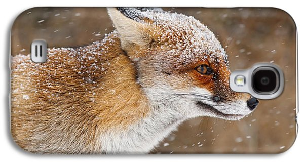 Let It Snow 6 - New Years Card Red Fox In The Snow Galaxy S4 Case