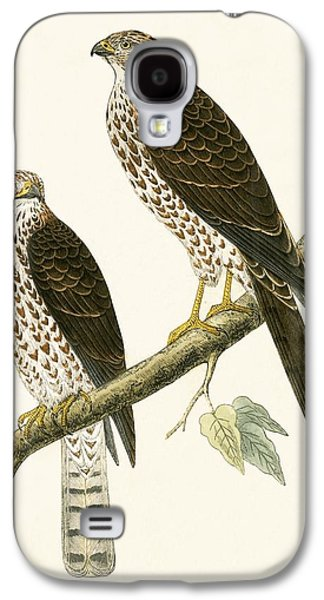 Levant Sparrow Hawk Galaxy S4 Case by English School