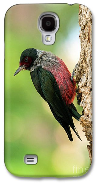 Lewis Woodpecker Galaxy S4 Case