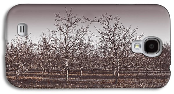 Lifeless Cold Winter Orchard Trees Galaxy S4 Case