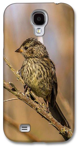 Little Bird On Little Branch Galaxy S4 Case