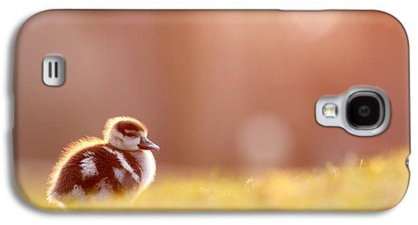 Little Furry Animal - Gosling In Warm Light Galaxy S4 Case by Roeselien Raimond