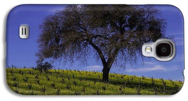 Lone Tree In Vineyard Galaxy S4 Case by Garry Gay