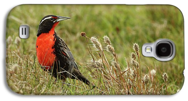 Long-tailed Meadowlark Galaxy S4 Case by Bruce J Robinson