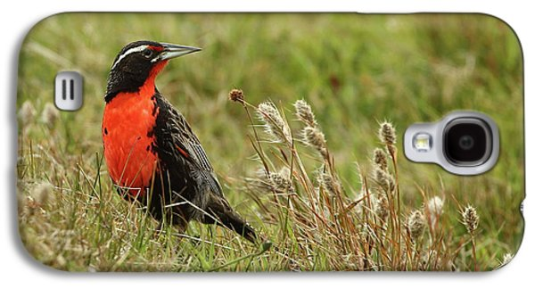 Long-tailed Meadowlark Galaxy S4 Case by Bruce J Robinson