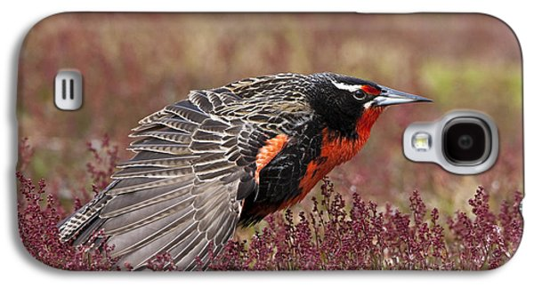 Long-tailed Meadowlark Galaxy S4 Case by Jean-Louis Klein & Marie-Luce Hubert