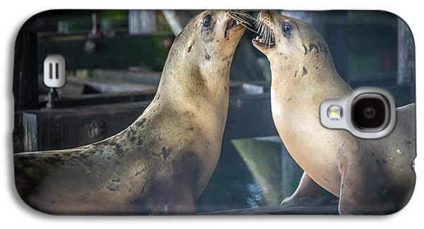 Harbor Seals Lovers Quarrel Galaxy S4 Case by James Hammond