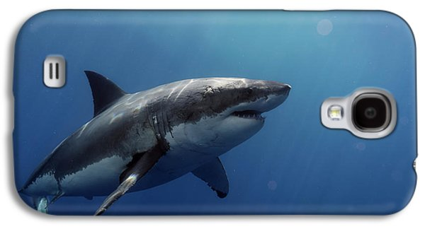 Lucy Posing At Isla Guadalupe Galaxy S4 Case by Shane Linke