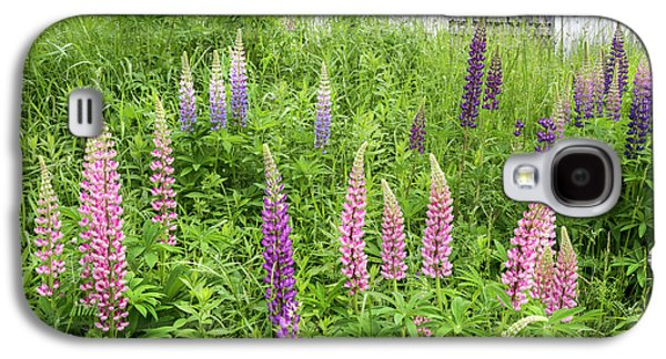 Lupine Cones And Weathered Shakes Galaxy S4 Case