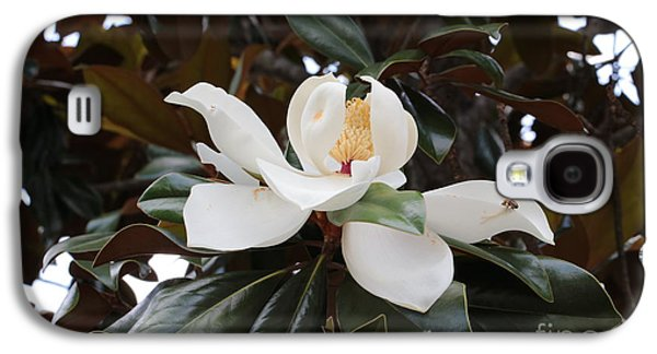 Magnolia Grandiflora With Leaves Galaxy S4 Case by Carol Groenen