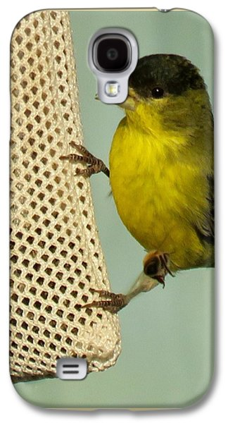 Male Goldfinch On Sock Feeder Galaxy S4 Case