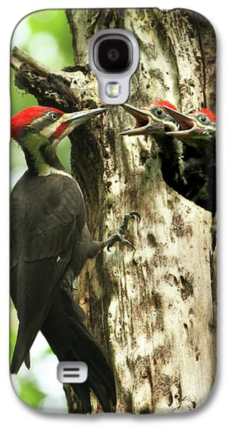 Male Pileated Woodpecker At Nest Galaxy S4 Case by Mircea Costina Photography