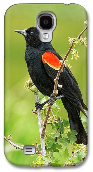 Male Red-winged Blackbird Galaxy S4 Case