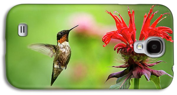 Male Ruby-throated Hummingbird Hovering Near Flowers Galaxy S4 Case