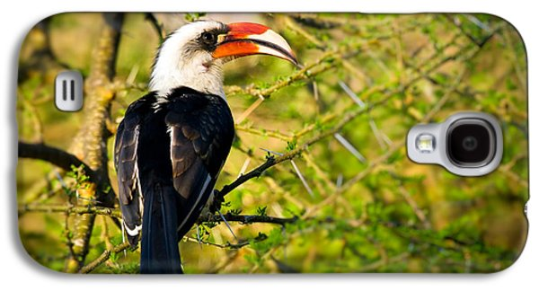 Male Von Der Decken's Hornbill Galaxy S4 Case by Adam Romanowicz