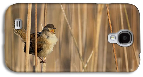 Marsh Wren Square Galaxy S4 Case