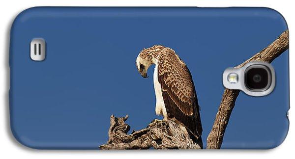 Eagle Galaxy S4 Case - Martial Eagle by Johan Swanepoel