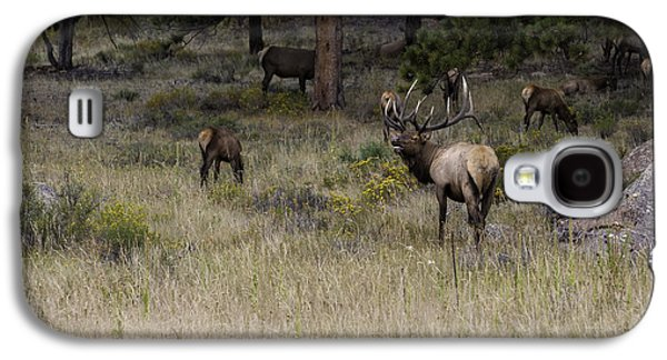 Master Of His Domain - Bull Elk Galaxy S4 Case by Thomas Schoeller