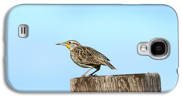 Meadowlark Roost Galaxy S4 Case by Mike Dawson