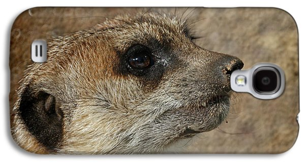 Meerkat 3 Galaxy S4 Case by Ernie Echols