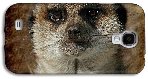 Meerkat 4 Galaxy S4 Case by Ernie Echols