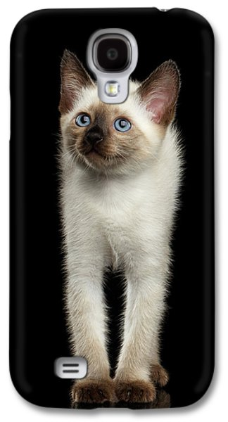 Mekong Bobtail Kitty With Blue Eyes On Isolated Black Background Galaxy S4 Case