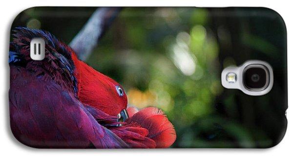 Miksang 4 Parrot Galaxy S4 Case