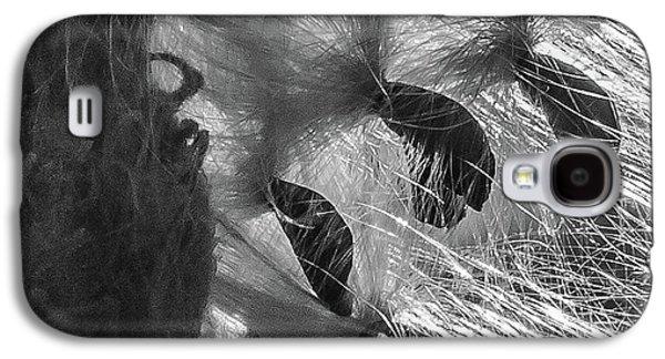 Milkweed Sunburst In Black And White Galaxy S4 Case