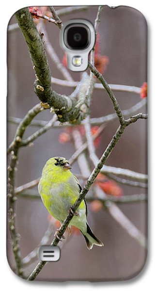Molting Gold Finch Galaxy S4 Case