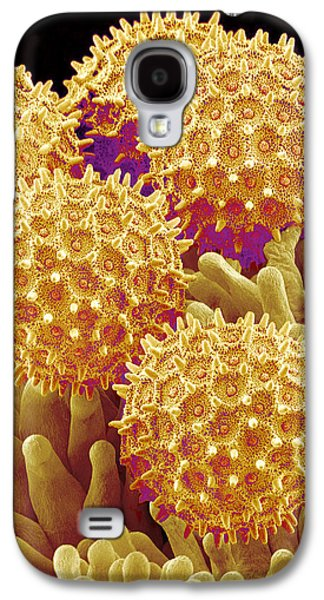 False-colour Galaxy S4 Cases - Morning Glory Pollen Grains, Sem Galaxy S4 Case by Susumu Nishinaga