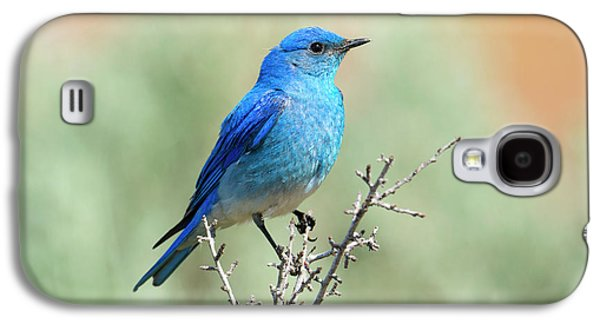 Mountain Bluebird Beauty Galaxy S4 Case by Mike Dawson