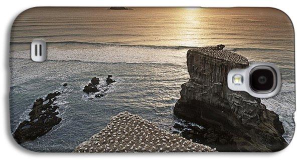 new zealand gannet colony at muriwai beach ,gannet fly from Muri Galaxy S4 Case