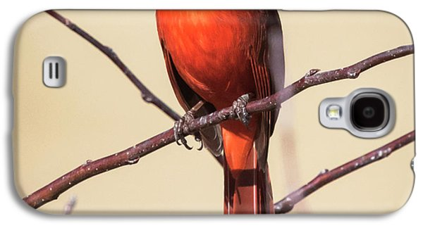 Northern Cardinal Profile Galaxy S4 Case