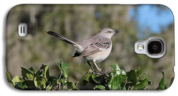 Northern Mockingbird Galaxy S4 Case by Carol Groenen