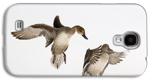 Two Ducks In Flight Photographs Galaxy S4 Cases - Northern Pintail Anas Acuta Duck Galaxy S4 Case by Wim Weenink