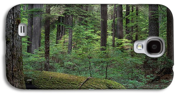 Old Growth Forest Galaxy S4 Case