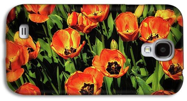 Tulip Galaxy S4 Case - Open Wide - Tulips On Display by Tom Mc Nemar