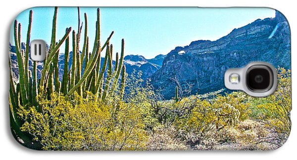Organ Pipe Cactus In Arch Canyon In Organ Pipe Cactus National Monument-arizona  Galaxy S4 Case by Ruth Hager