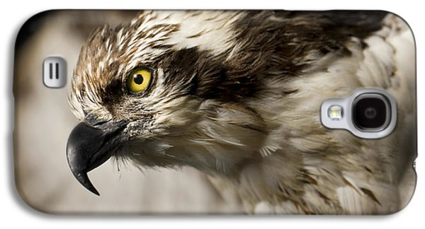 Osprey Galaxy S4 Case by Adam Romanowicz