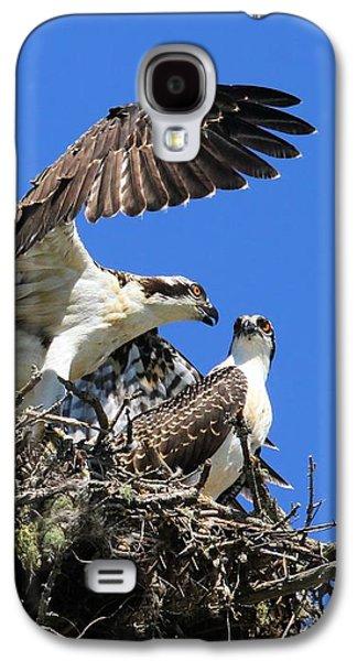 Osprey Chicks Ready To Fledge Galaxy S4 Case