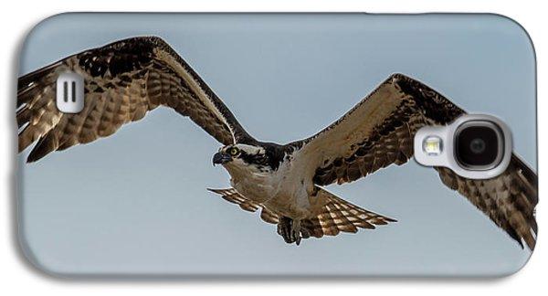 Osprey Flying Galaxy S4 Case by Paul Freidlund
