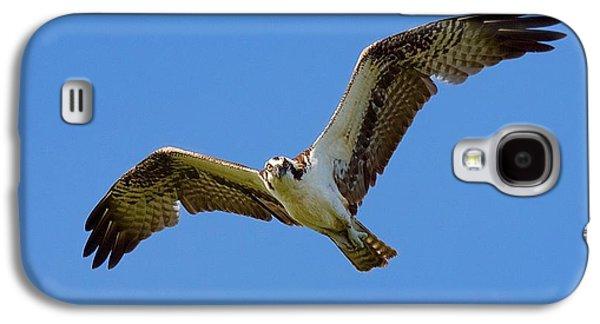 Osprey In Flight Galaxy S4 Case by Mark Reinnoldt
