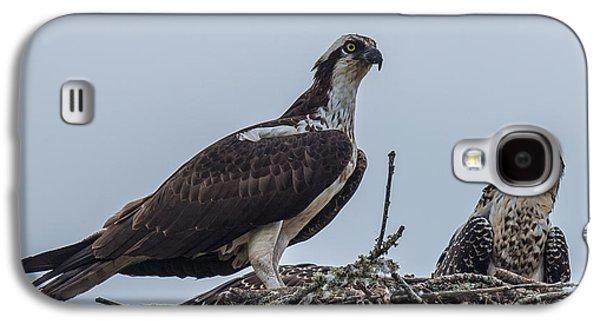 Osprey On A Nest Galaxy S4 Case by Paul Freidlund