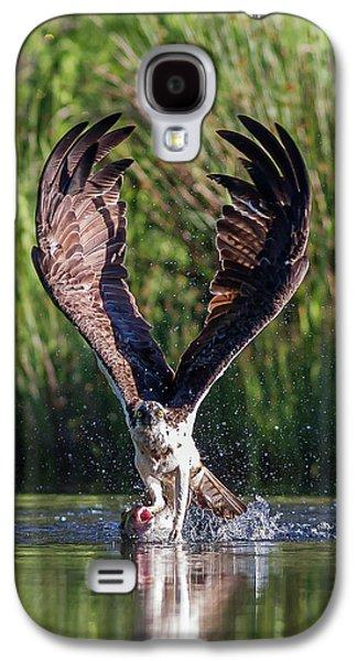Osprey Galaxy S4 Case - Osprey - Strike by Pat Speirs