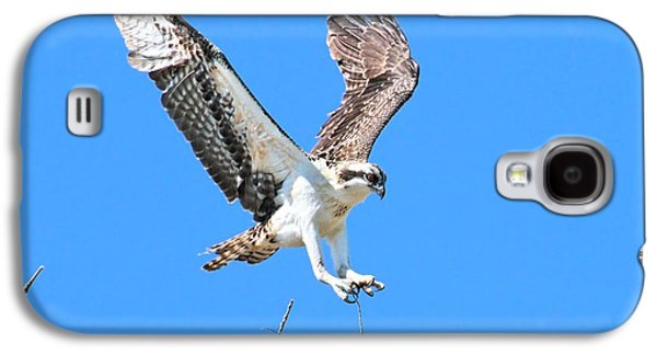 Ospreys Learning To Fly Galaxy S4 Case