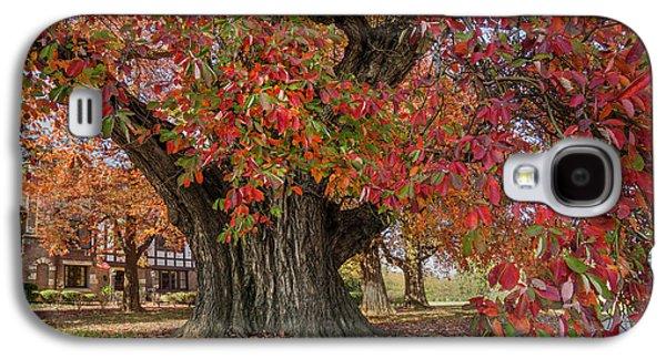 Owensboro Sassafras  Tree Galaxy S4 Case