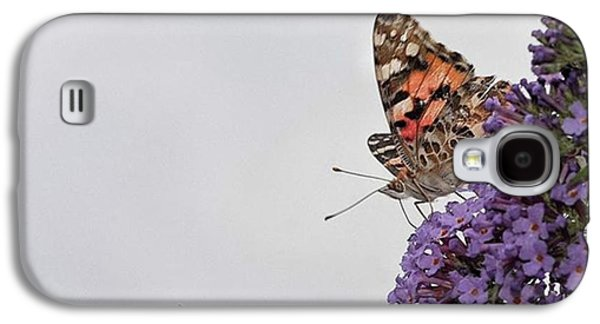 Galaxy S4 Case - Painted Lady (vanessa Cardui) by John Edwards