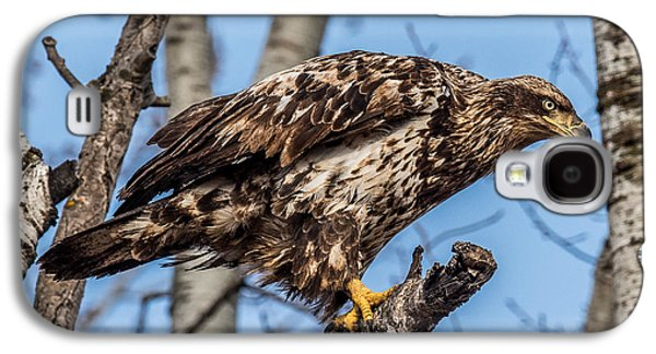 Perched Juvenile Bald Eagle Galaxy S4 Case by Paul Freidlund