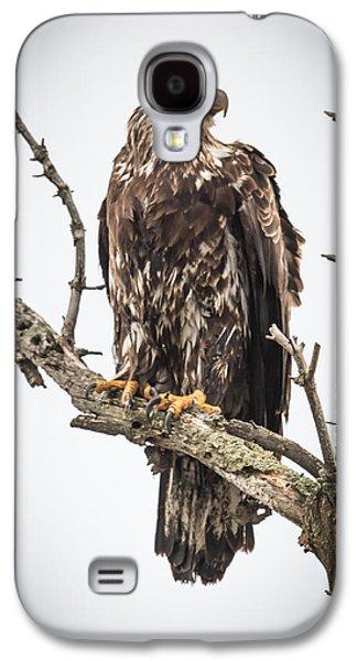 Perched Juvenile Eagle Galaxy S4 Case by Paul Freidlund