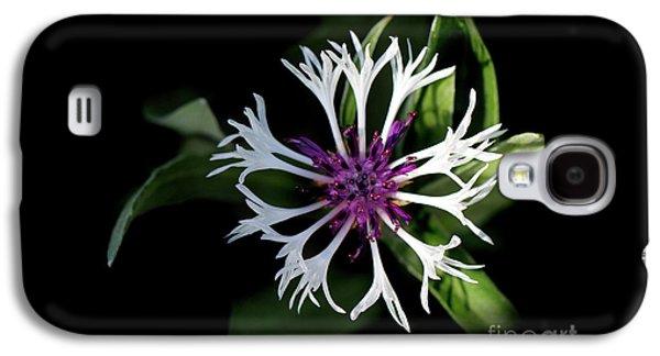 Perennial Bachelors Button Galaxy S4 Case by Karen Adams